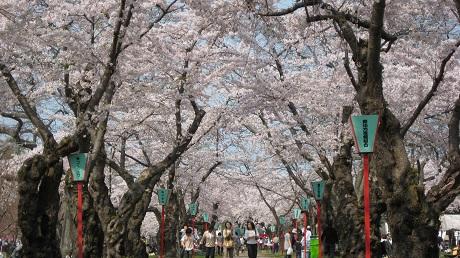 もりまち桜まつり